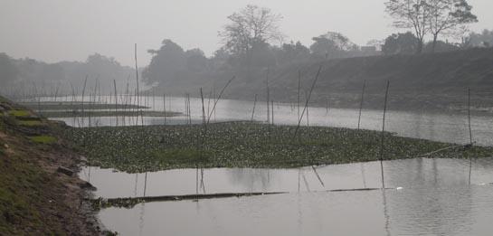 ছোট যমুনা নদীতে মাছ ধরার জন্য এভাবে পাশাপশি অসংখ্য কাঠা তৈরি করা হয়েছে