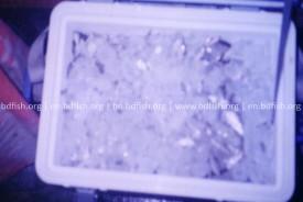 চ্যাপা শুঁটকির কাঁচামাল তথা পুঁটিমাছ সংগ্রহ